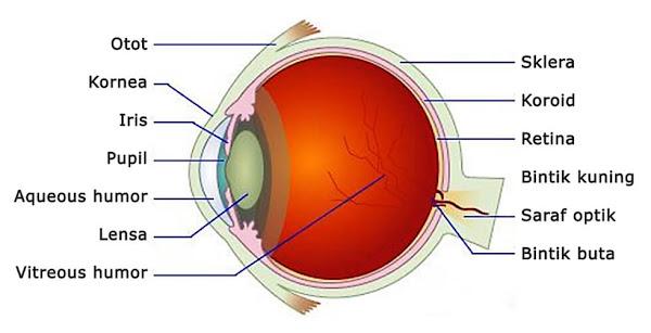 optik mata