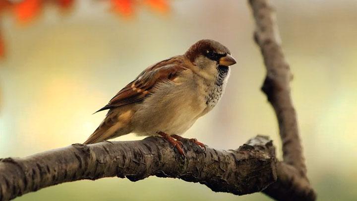 pest control for birds