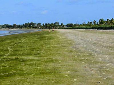 Playa Verde de Guayana Francesa