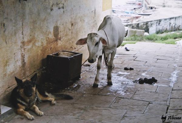 strazi-In-Varanasi