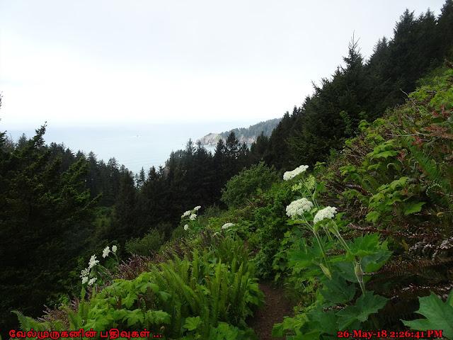 Mt Neahkahnie Hike Oregon