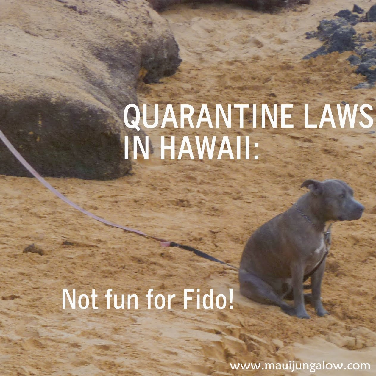 Maui Jungalow: Quarantine in Hawaii (Not Fun for Fido!)
