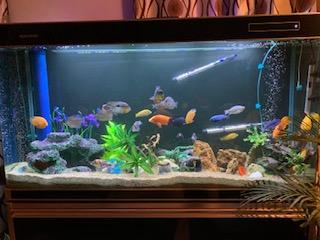फिश एक्वेरियम वास्तु के टिप्स Fish Aquarium Vastu Tips for Home