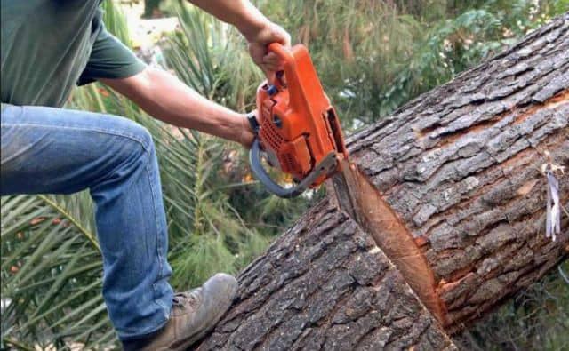 Τραγωδία στην Επανομή! Άντρας καταπλακώθηκε από δέντρο