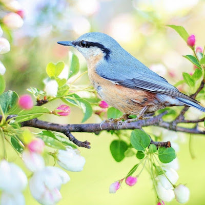Birds Captions,Instagram Birds Captions,Birds Captions For Instagram