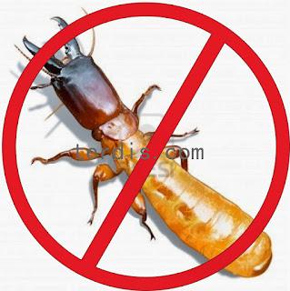 obat anti rayap alami