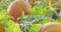 Citrouille pour le traitement de la prostate