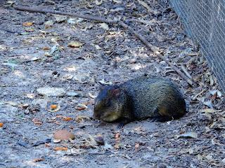 Parco Gallorose(ガッロロゼ公園)動物