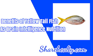 9 Benefits of Yellow Tail Fish as Brain Intelligence Nutrition