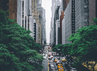 new york city, street, buildings, trees, urban life, lifestyle, green cities
