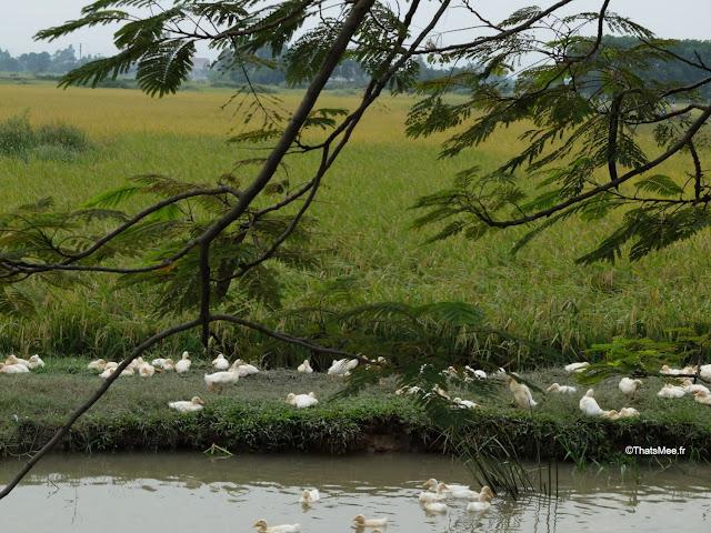 reserve naturelle van long ninh binh riviere canard poussins