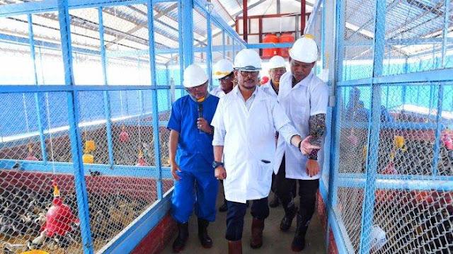Busyet, Anggaran Pengadaan Ayam di Kementerian Pertanian Rp770 Ribu per Ekor