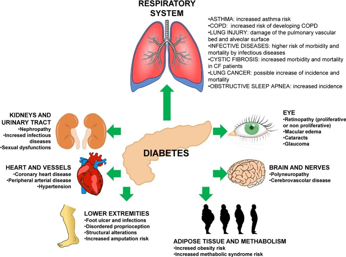 sistemas corporales relacionados con la diabetes