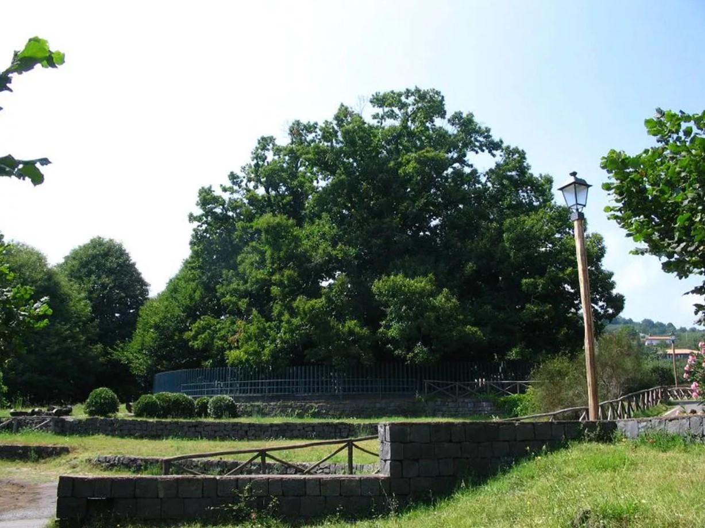 Oldest Living Trees, Chestnut Tree of One Hundred Horses