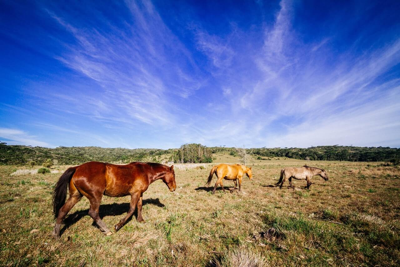 Three Horses in Grassfield HD Copyright Free Image