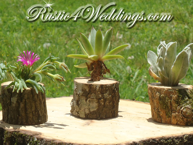 Air Plant Holders | Succulent Plant Holders | Hens And Chicks Planter - Succulent Containers