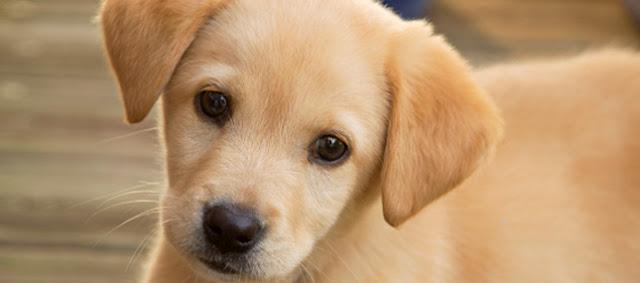 Τα 44 πιο famous ονόματα σκύλων