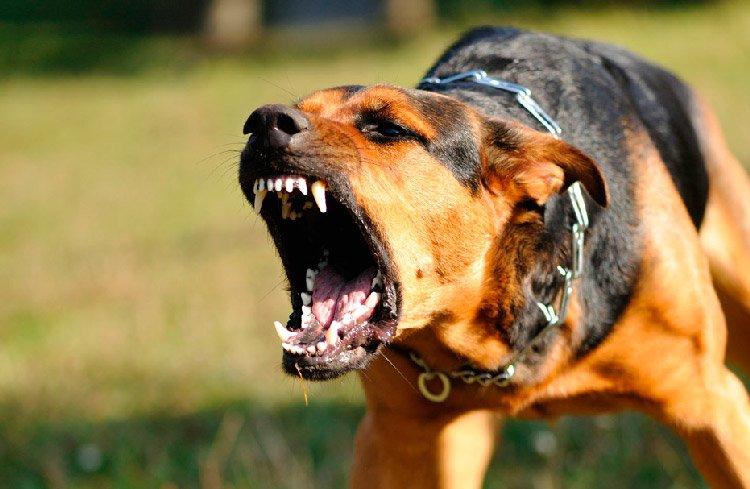 Perro amenazante