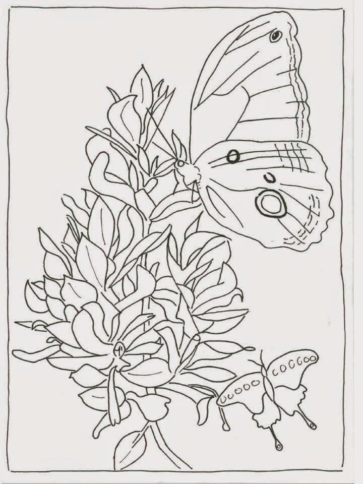 Favoriete Schilderijen van Orchideeën & andere botanische werken #JK13