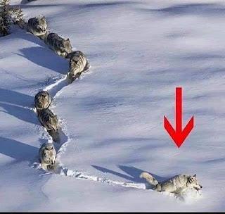 Follow Apa Yang Orang Berjaya Dah Buat