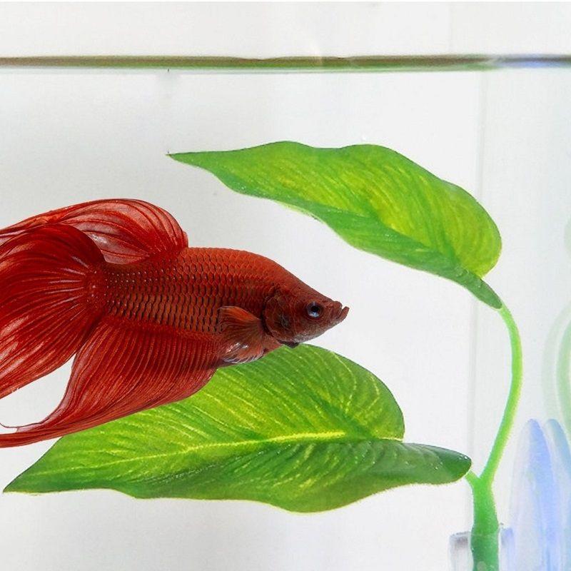 Image Hammock Fish