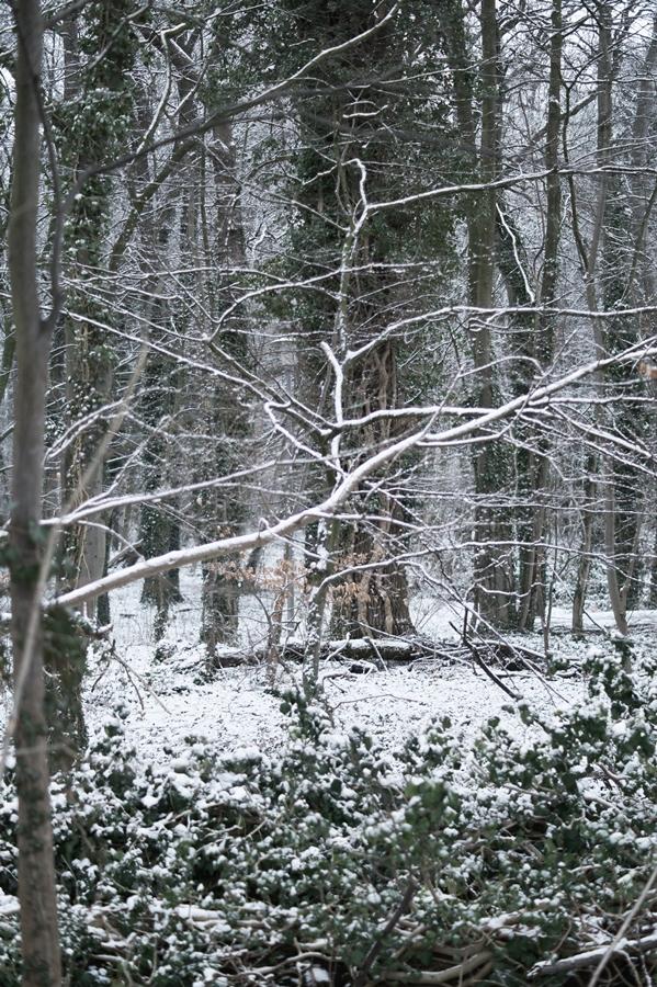 Blog + Fotografie by it's me! - Draussen - Frau Frieda sucht Schnee, verschneites Geäst