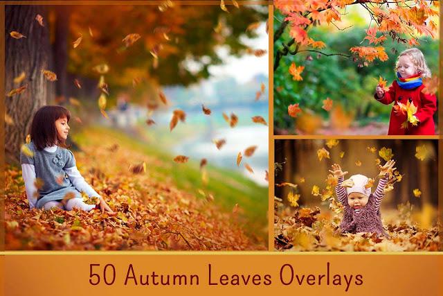 50 Autumn Leaves Overlays