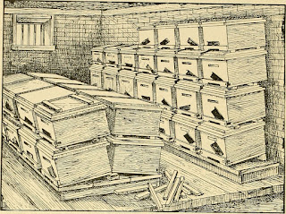 beehives in a basement