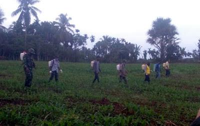 Babinsa Koramil 24/Lembah Seulawah Dampingi Penyemprotan Tanaman Jagung