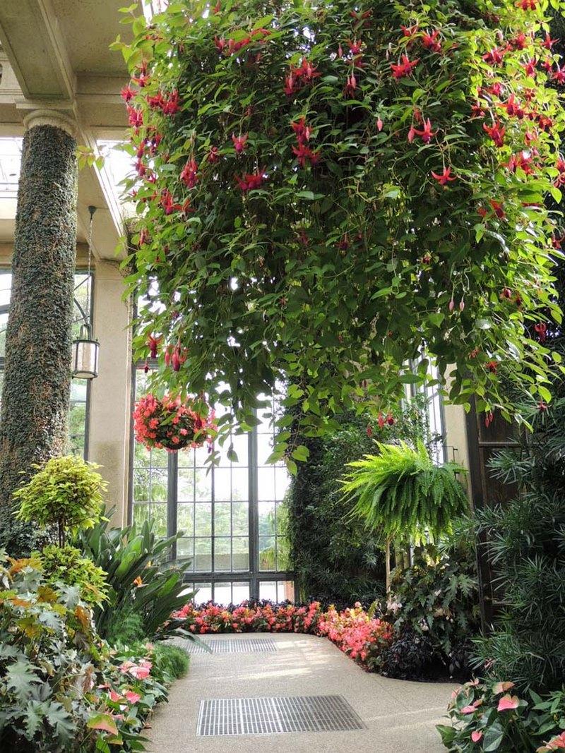 Cestas colgantes con fucsias (Fuchsia) en Longwood Gardens