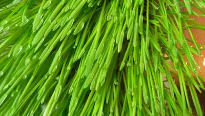 http://www.herbiness.com/wp-content/uploads/2013/01/owiess1.jpg