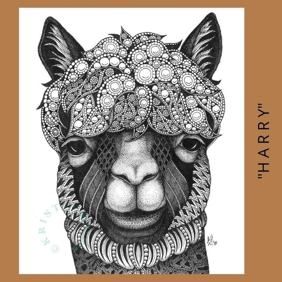 02-Alpacas-Kristin-Moger-www-designstack-co