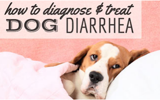 Diarrhea in Dogs: Causes and Treatment
