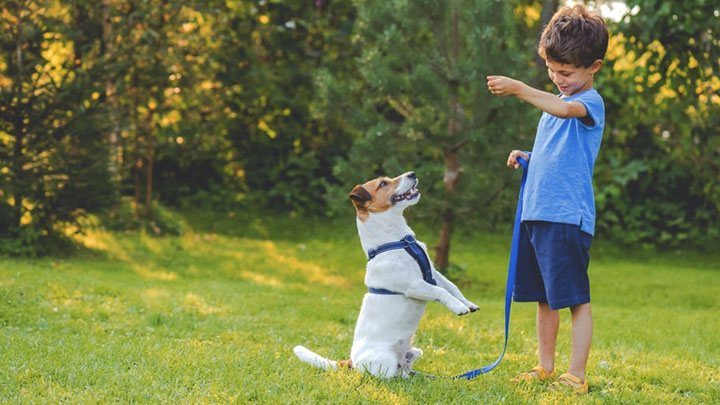 basic puppy commands