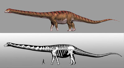 Patagotitan mayorum - el mayor animal terrestre de la historia