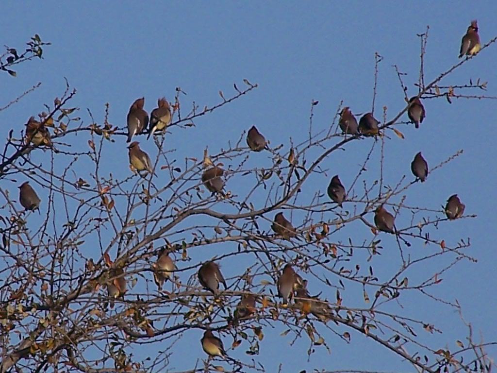Birds In Backyard Trees