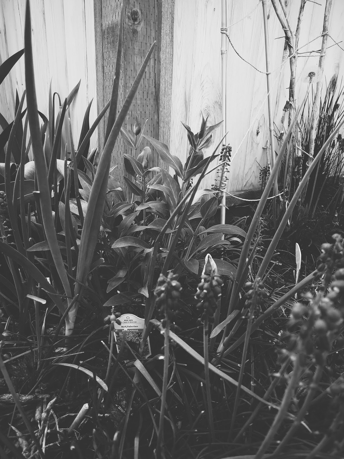 plants coming up // life in black & white series // www.thejoyblog.net