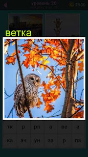 осеннее дерево на ветке которой сидит птица сова 20 уровень 667 слов