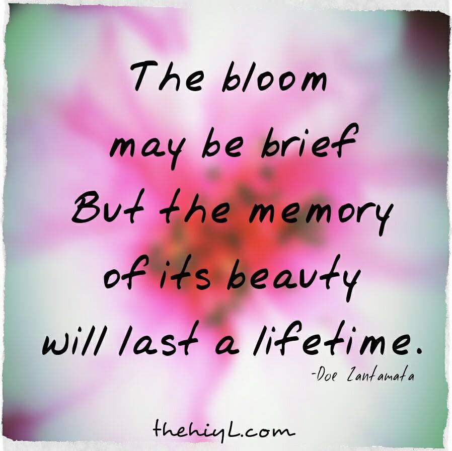 Bloom Quotes Doe Zantamata Quotes: Bloom Bloom Quotes