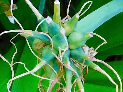 #payabay, #payabayresort, beauty, flora, flowers, nature, paya bay resort, wild flowers,