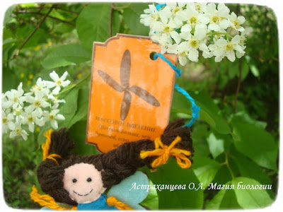 фенофазы, феечка, наблюдения весны, черемуха, карточка