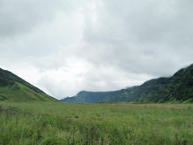 Savana bormo akan menghijau saat musim hujan