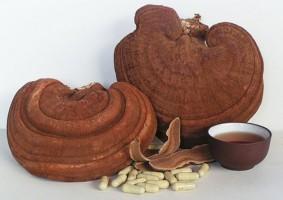công dụng của nấm linh chi đối với bệnh tiểu đường