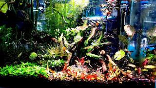 Community Fish Tank 4K HD Wallpaper
