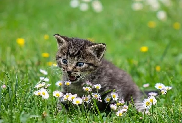little cat anger with flower