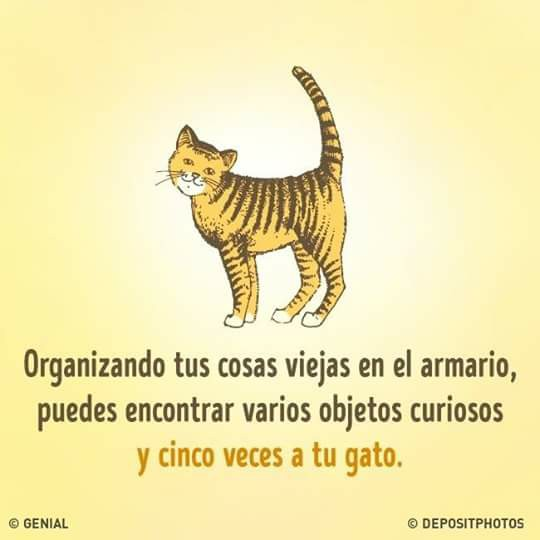 humor grafico gatos y tu armario de ropa