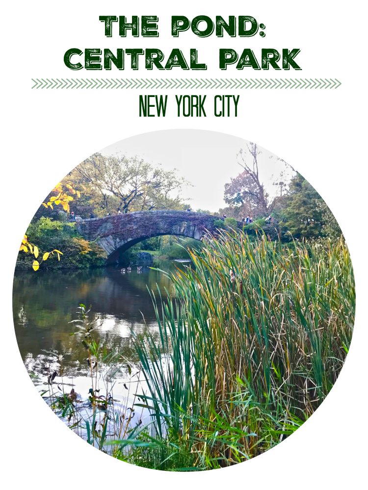 The Pond in Central Park is a beautiful oasis in New York City | Ms. Toody Goo Shoes