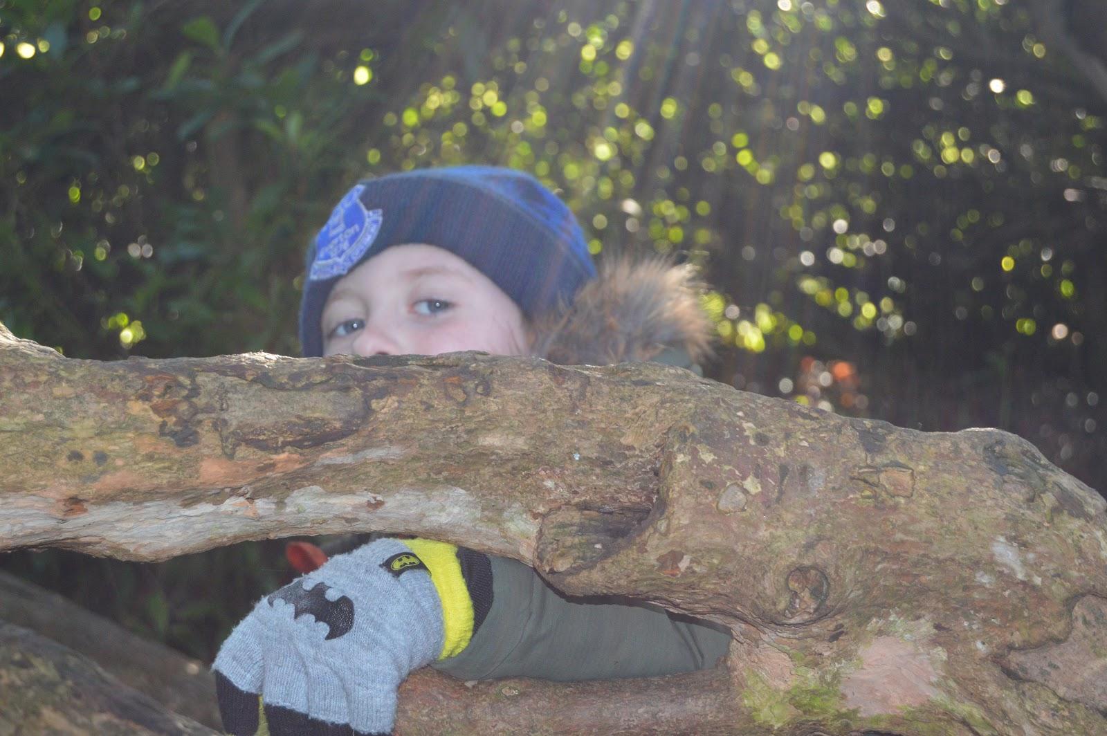 Boy climbing a tree