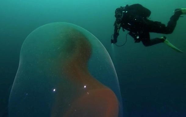"""Дайвери зняли в океані """"інопланетний"""" ембріон"""