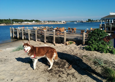Gosman's Dock in Montauk Point Long Island NY has shops and restaurants.  There are often Summertime concerts as well